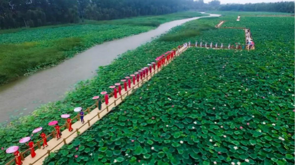"""台儿庄运河湿地""""荷花节""""和""""旗袍展""""美到令人心动!"""